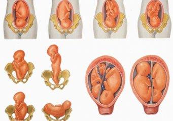 как выглядит ребёнок в 33 недели беременности видео
