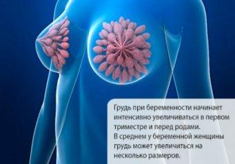 bolshim-chernim-chlenom-v-beluyu-popu