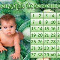 Персональный календарь беременности рассчитать